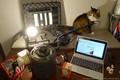 Лампы накаливания и напряжение в сети