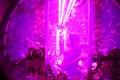Светодиоды Philips помогут выращивать салат в космосе