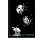 426/1A Chrome Transparent Bouquet бра IDL