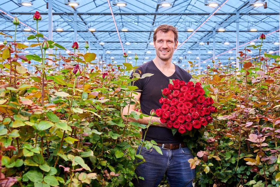 Marjoland увеличил урожай роз с помощью гибридной системы освещения
